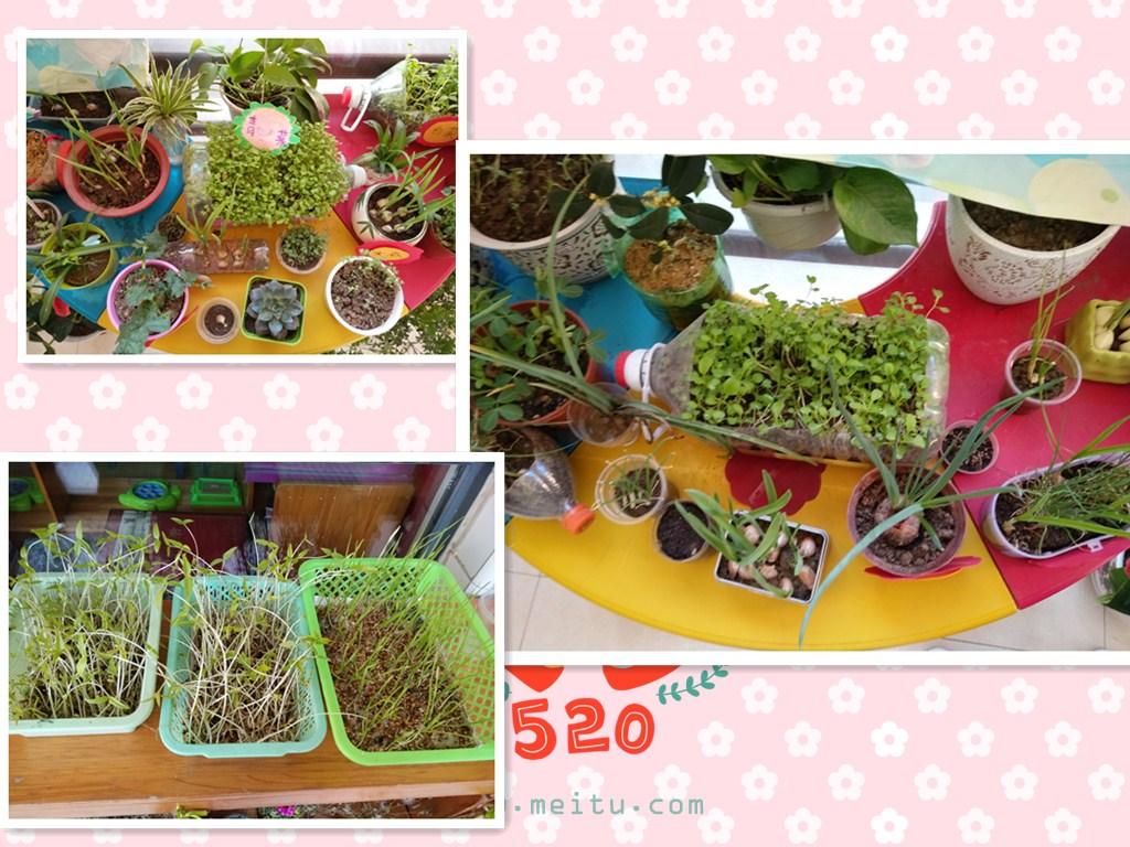 幼儿园植物成长记录封面_幼儿999